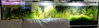 Darujem 500l akvárium 200x50x50 + stojan za 50€