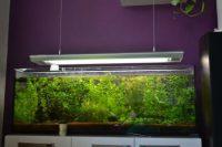 Akvariove rastlinky