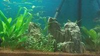 Kamene do akvária