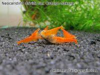 P: Krevetky, slimaky – Akvatera TT 15.10.2017