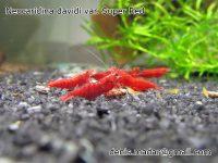 P: Krevetky a slimaky – Akvatera Kosice