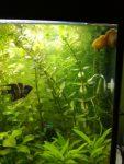 Rastlinky do akvária