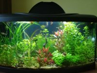 Rastlinky z môjho akvária