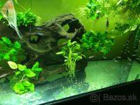 Predam Anubiasi, rastliny do akvaria