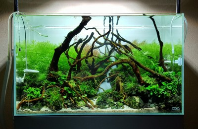 ADA 60P - Forest stream.jpg