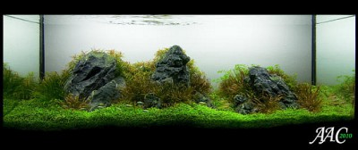 Top-10-Acuavida-Aquascaping-Contest-2010-Medium-Tank-8.jpg