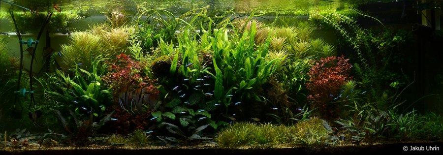 Akvarium 1120L aktualne
