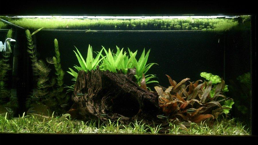 Akvarium 180l
