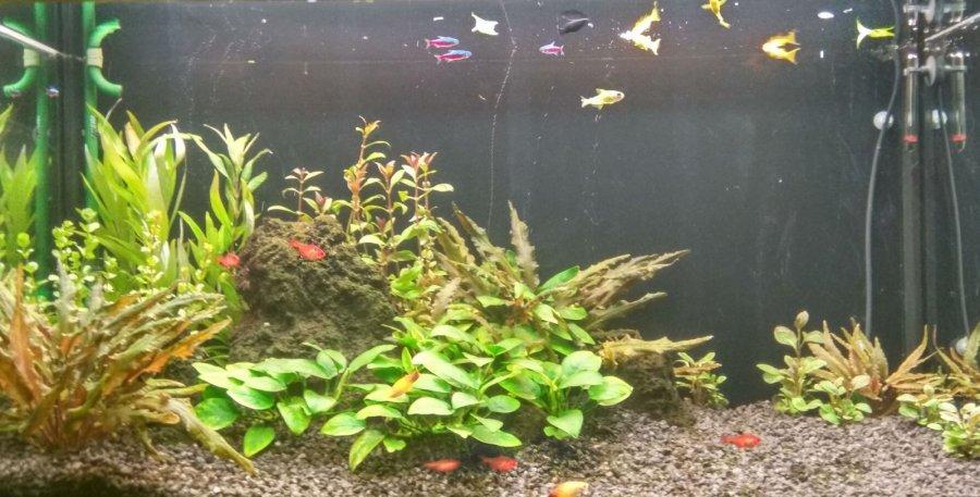 Akvárium 250l