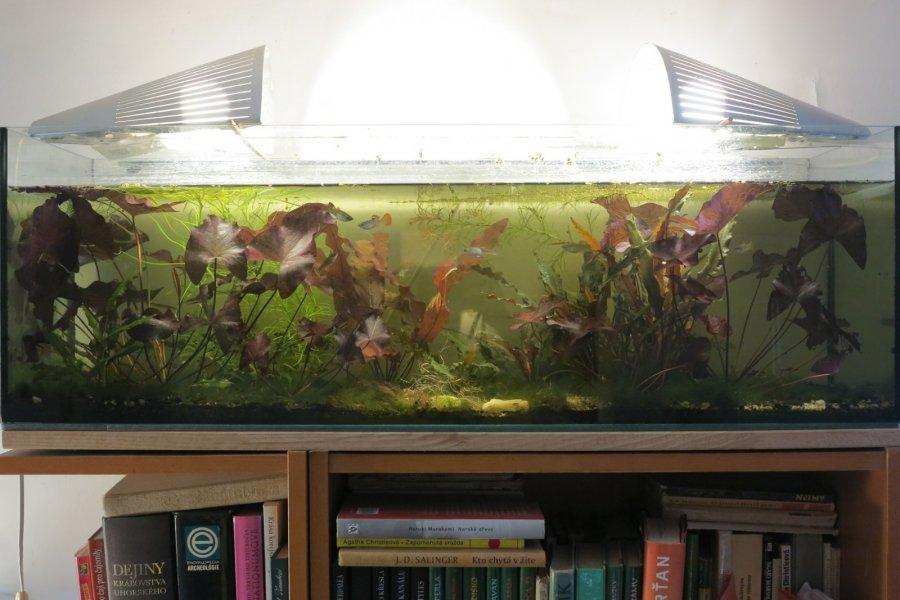 Akvárium u stropu