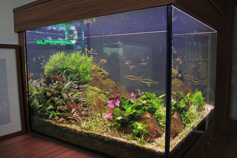 Naše nové 245 l akvárium (70 x 70 x 50 cm)