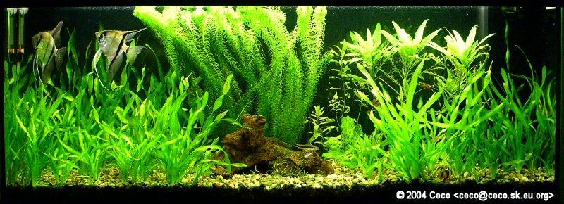 Moje akvarium - 19 mesiacov po zalozeni