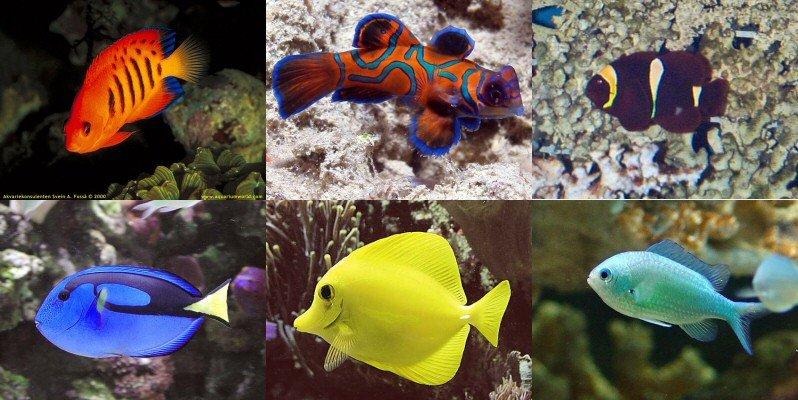 Morske ryby