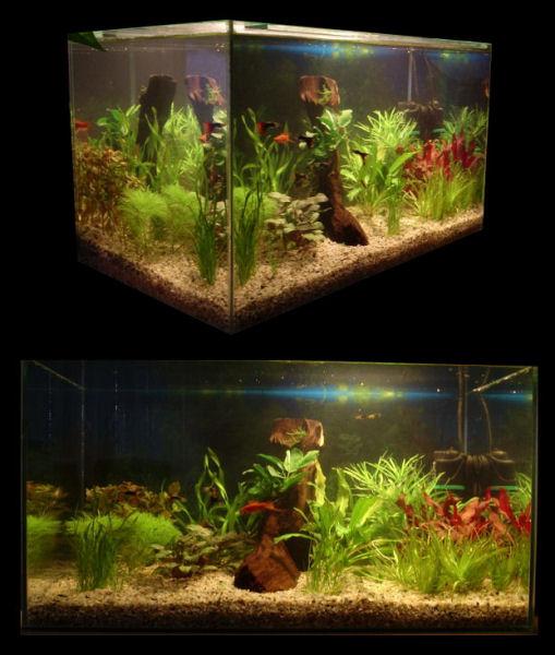 Akvarium gabo 54l