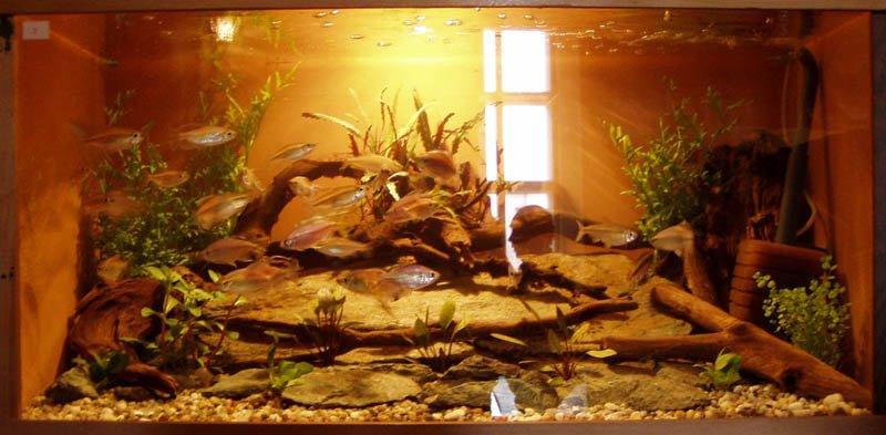 Akva výstava Martin, 9. - 18. 9. 2005