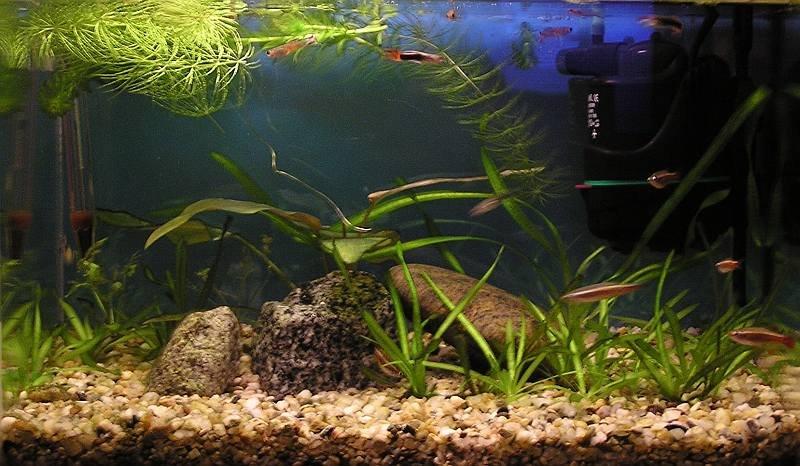 Male akvarium 2