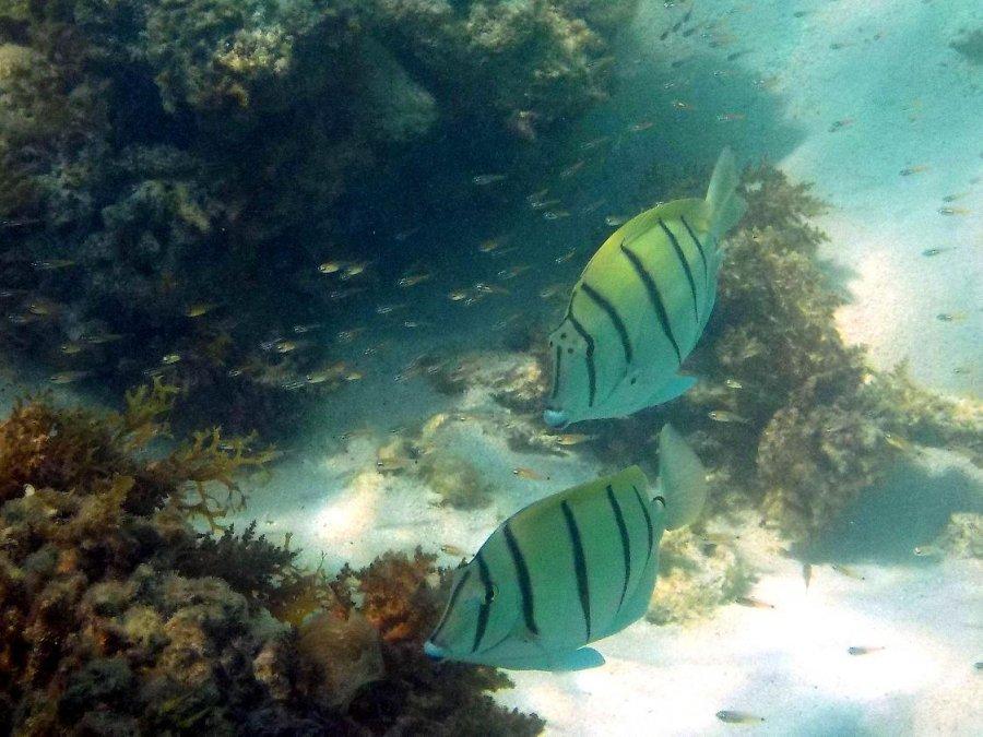 Zo spomienok na koralove utesy