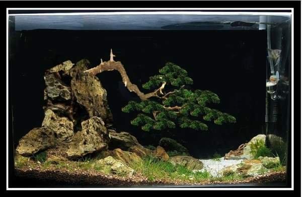 Virtuál bonsai akvárium