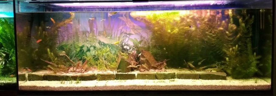Svetlo Ra 80 klasika - 90 rastlinné