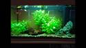 Moje akvárium po pol roku