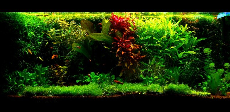 Botany A