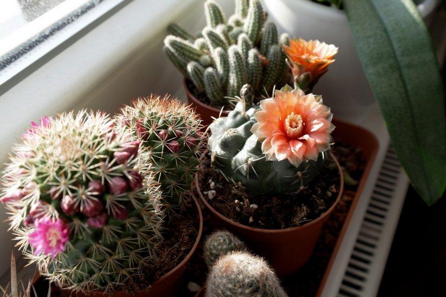 Dalsi prirastok do kaktusovej rodinky