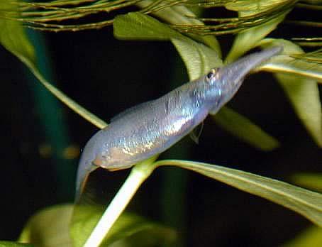 samice krátce před porodem
