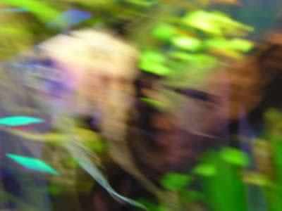 fotenie akvaria/