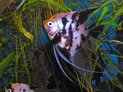 fotenie akvaria