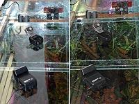 Fotenie akvária s bleskom